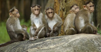 Unlearn what they taught these five monkeys & the working middle class & poor will thrive.