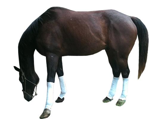 Horse1-1