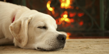 'Tis the Season…to Be Aware of the Importance of Sleep