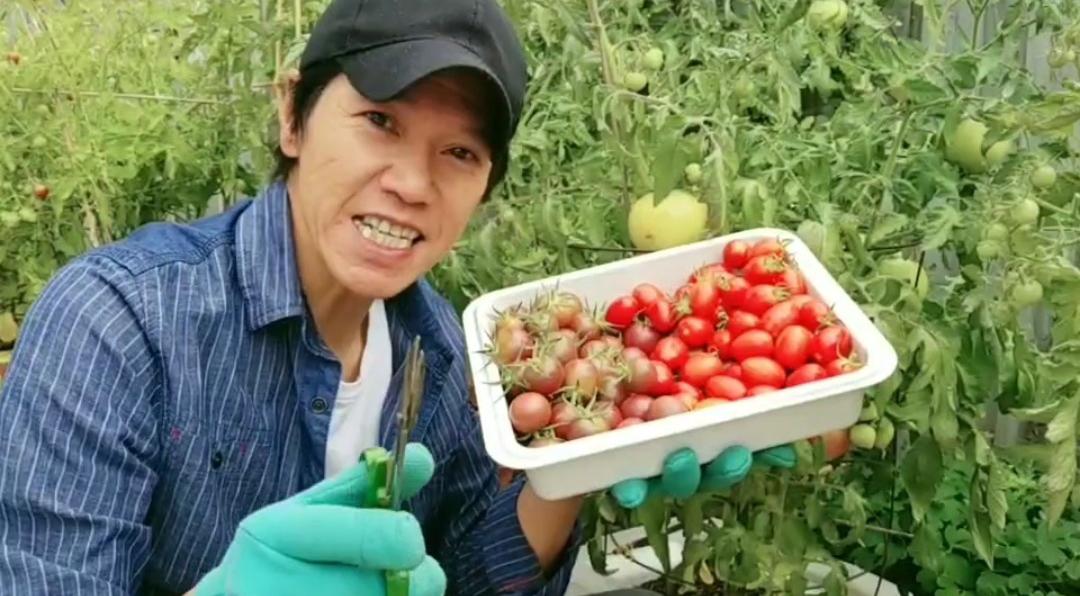 嘉華HandyLam – 今回分享種蕃茄小貼士