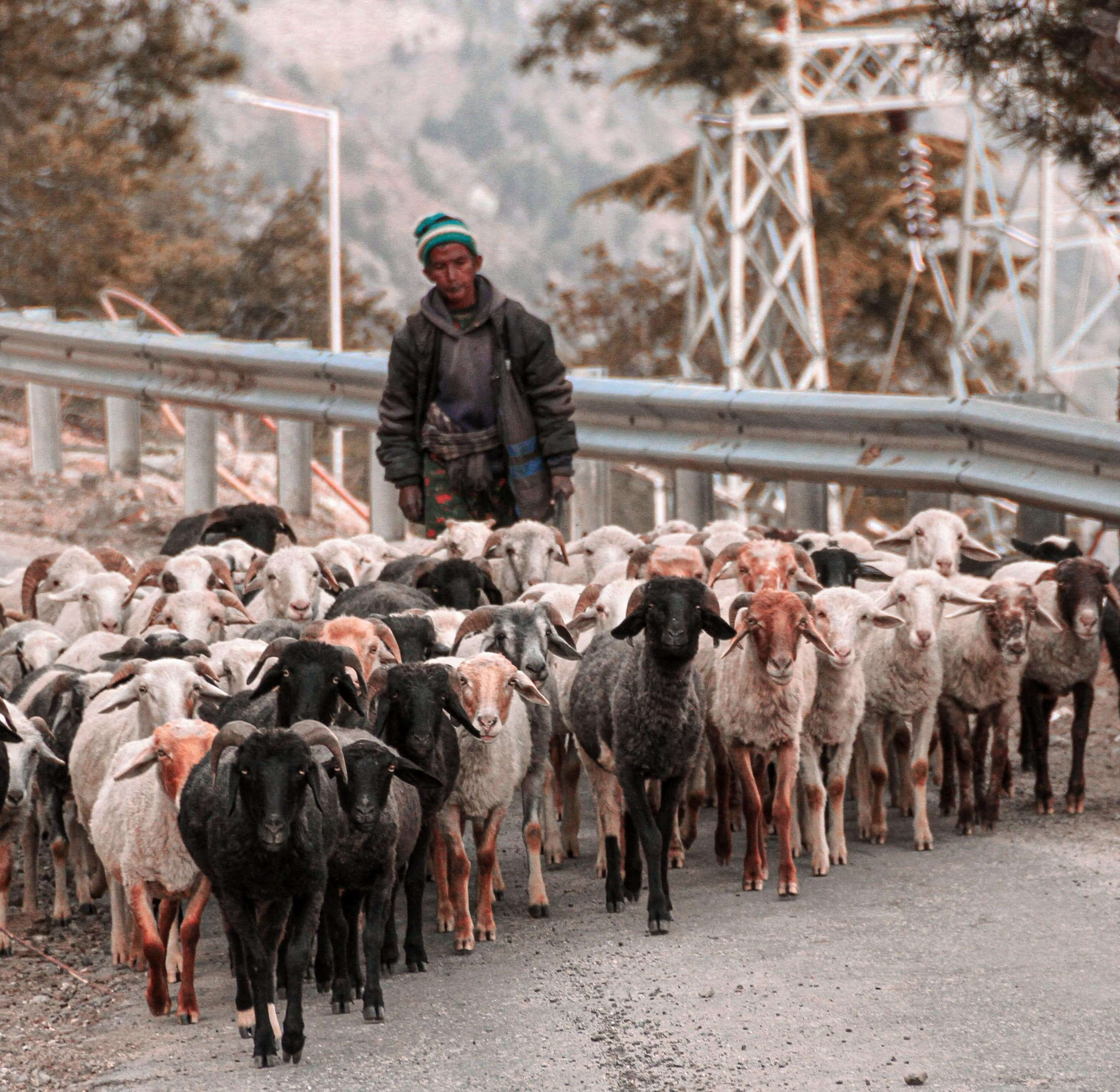 Sheep Herders on my way to Village Kashmir