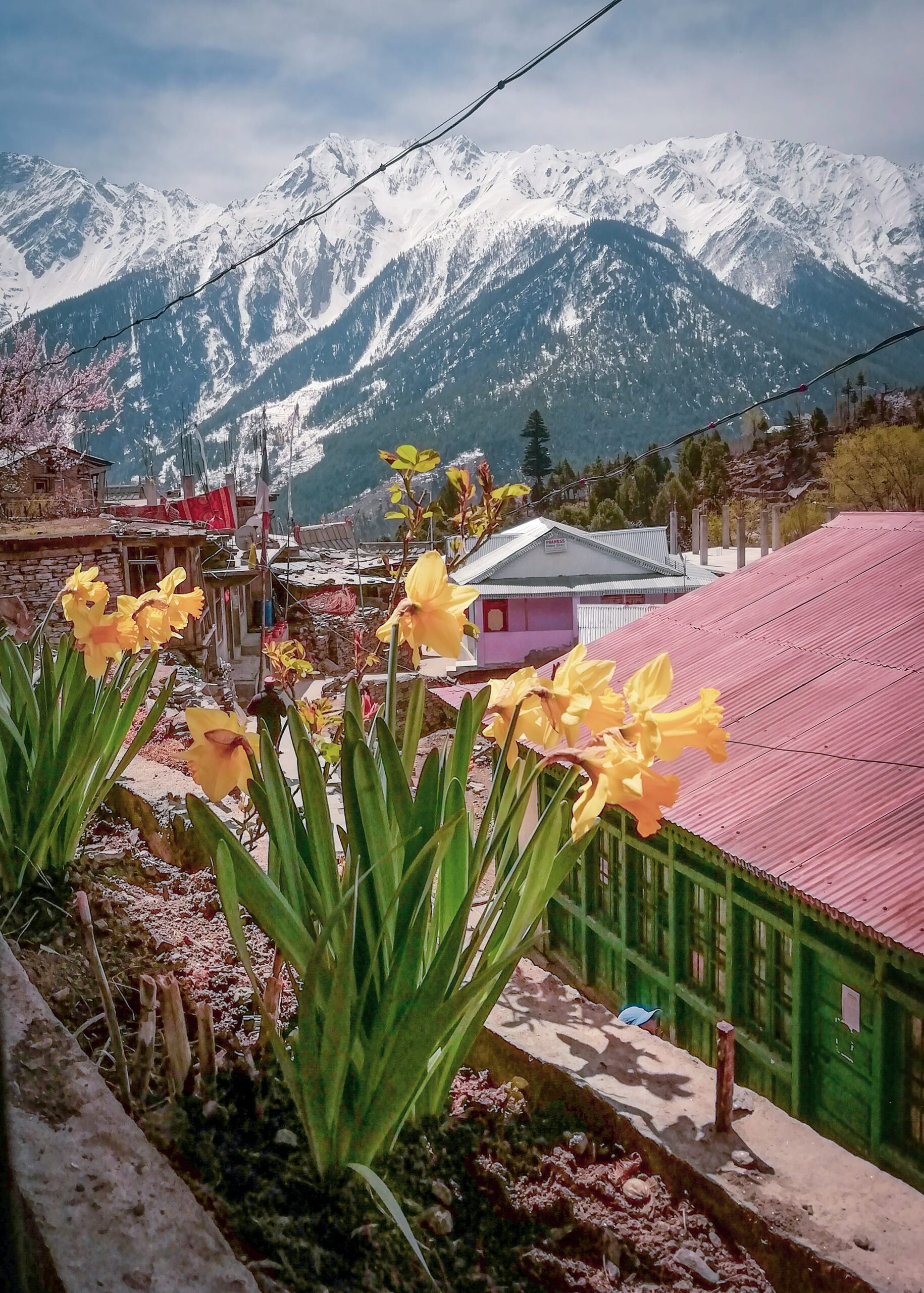 View of the mountains from the Kalpa Valley in Kinnaur District