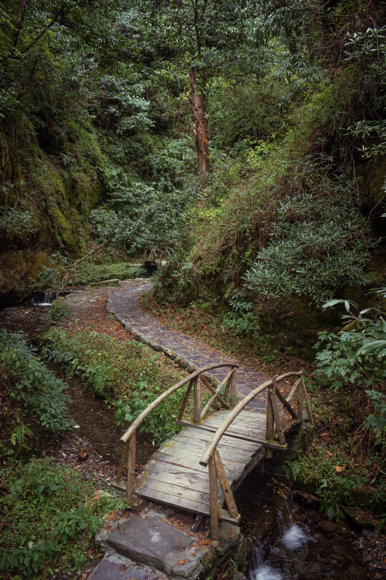 Wooden Bridges in the dense