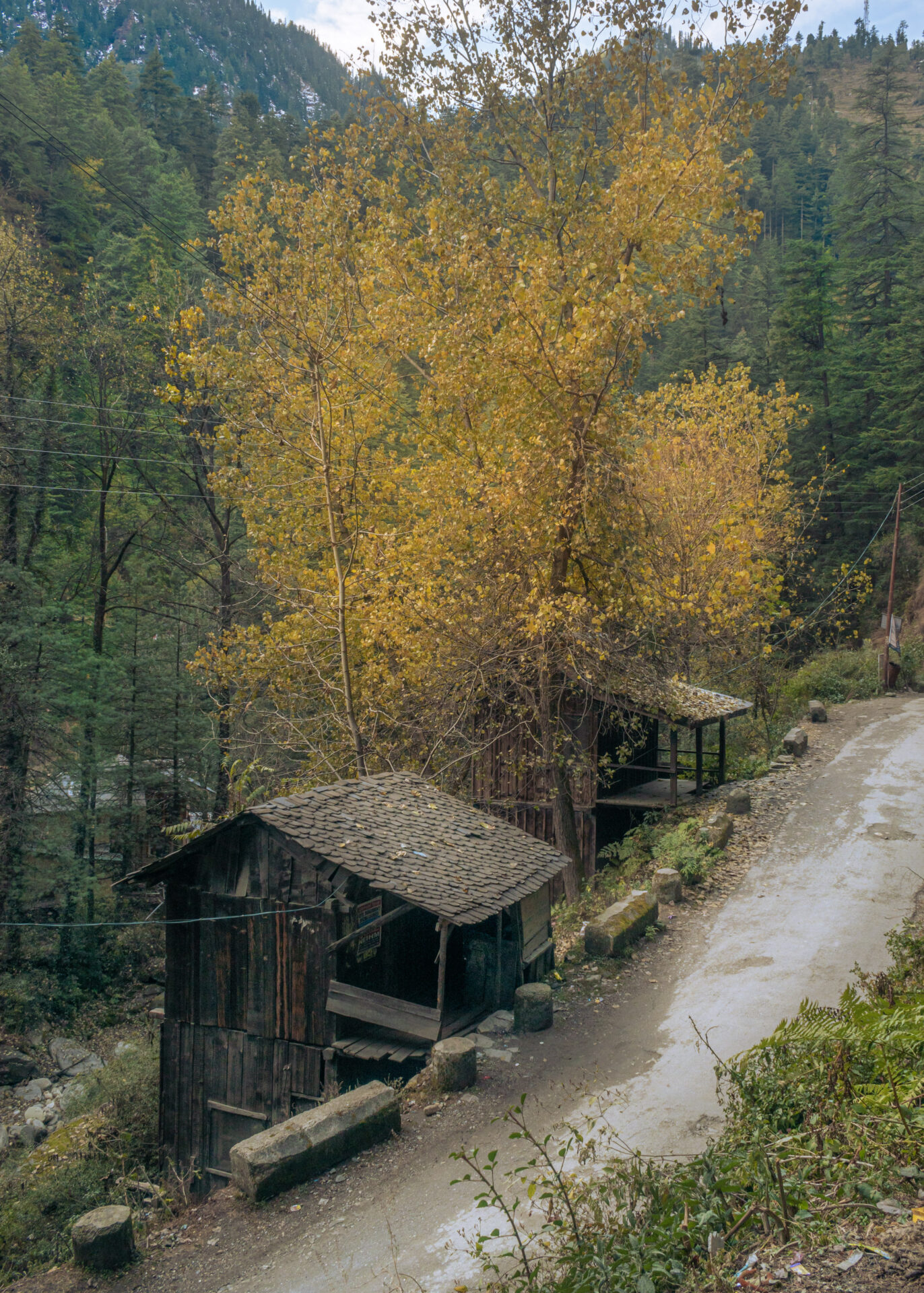 The Autumn color tree and a small house in Jibhi Himachal