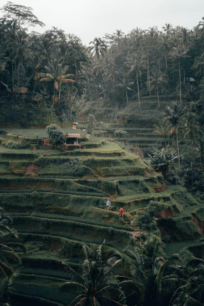 Bali Ricefiled Hotel