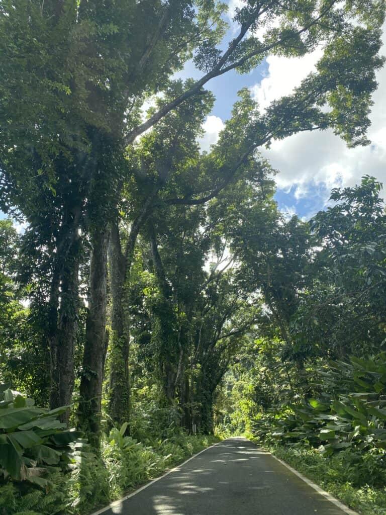 Driving in el Yunque Puerto Rico
