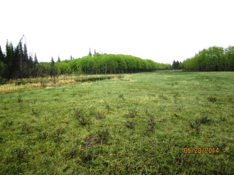 Open pasture in Yamnuska Nat Area