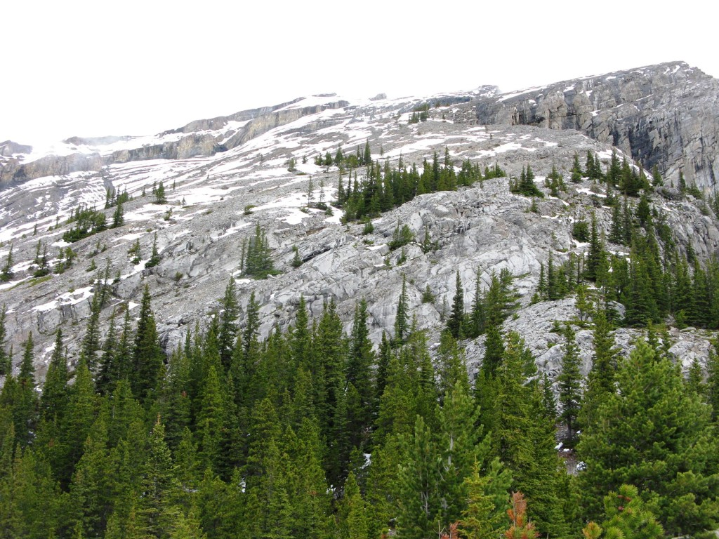 View past the trees to the summit