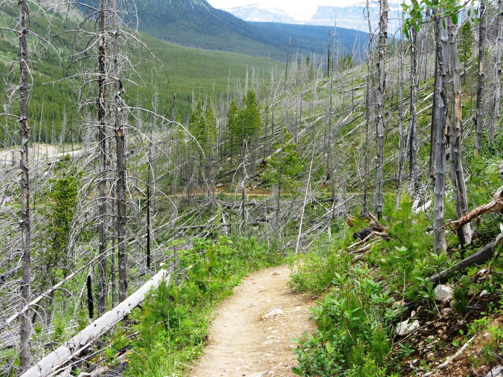 Trail up through the burnt out forest