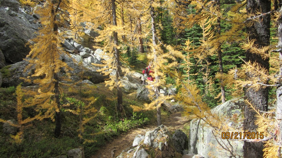 Larch trees on Big Larches trail