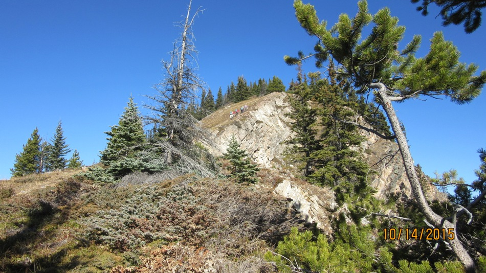 Trees are thinning as we reach the ridge