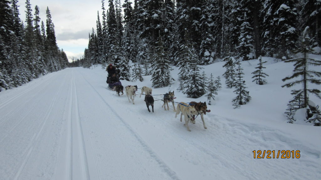 One of the many dog sleighs rides passing us