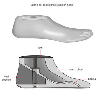 balanced foot