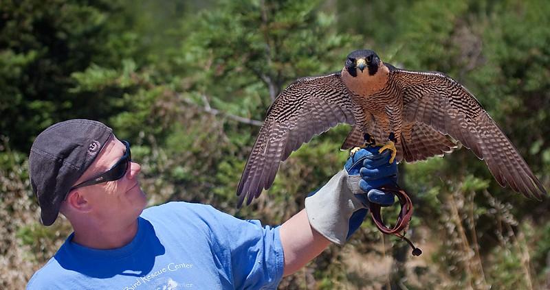 Bird Rescue Center