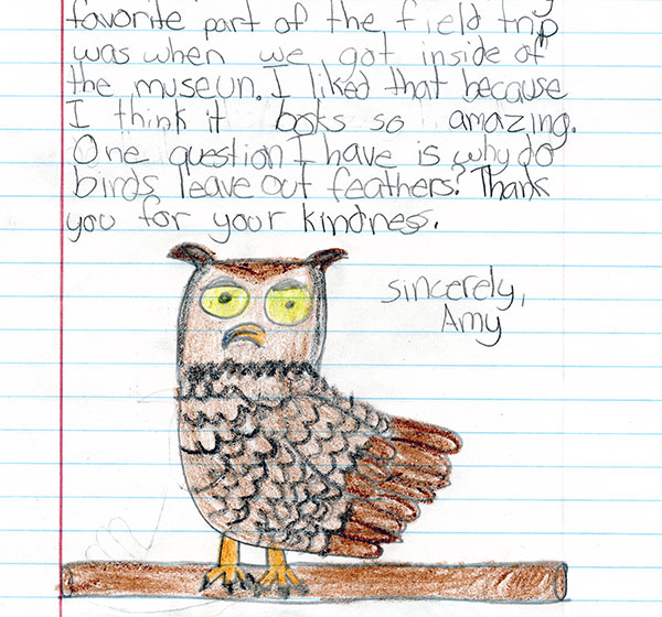 Amy's Great Horned Owl