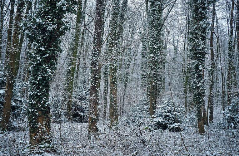 "227 – ""The Forest Deep"" – Illariel"