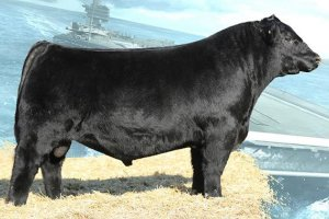 605 Sires | 605 Sires is a full-service semen collection center that will collect, freeze and store semen on your valuable herd sire. We will be working closely with John Weston, Weston Consulting, to establish a business that is second to none in service, quality and integrity. Our brand new, state-of-the-art lab, featuring the CASA system (Computer Assisted Semen Analysis) will insure your valuable genetics are handled with the utmost care and quality control. Our boarding barn and collection area are designed to focus on your sires' comfort and safety. Our convenient drive-thru load-out alley provides quick and easy loading/unloading. 605 Sires was designed from the ground up with you, the customer, in mind. Including our revolutionary semen inventory database, Your605, giving you the opportunity to completely track inventory and sire progress 24/7 simply by logging into your account! With a lifetime of industry experience, 605 Sires is committed to earning your business and trust. Please feel free to contact us at anytime and let us serve you!