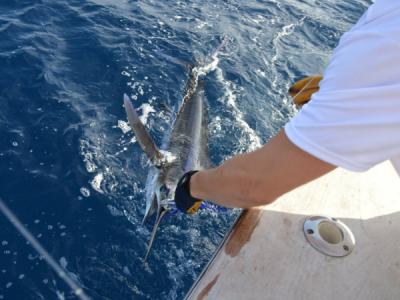 BGB 2017 Fishing