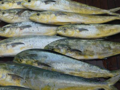 BGB 2017 Lots of Fish