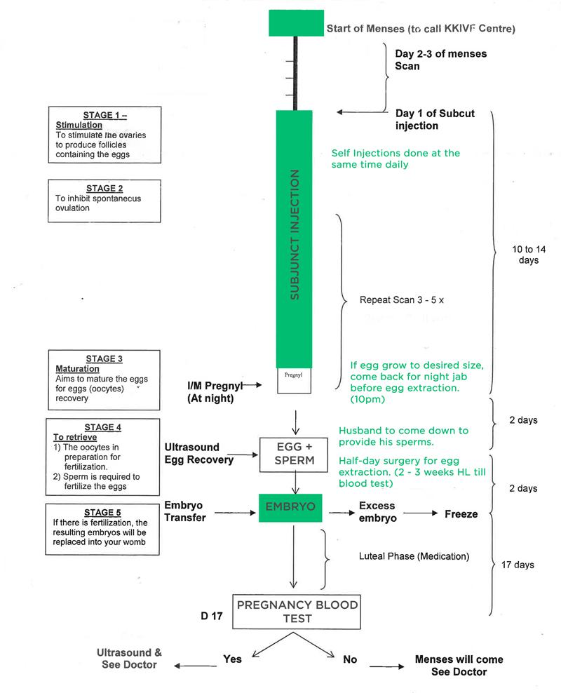 IVF Procedure at KKH