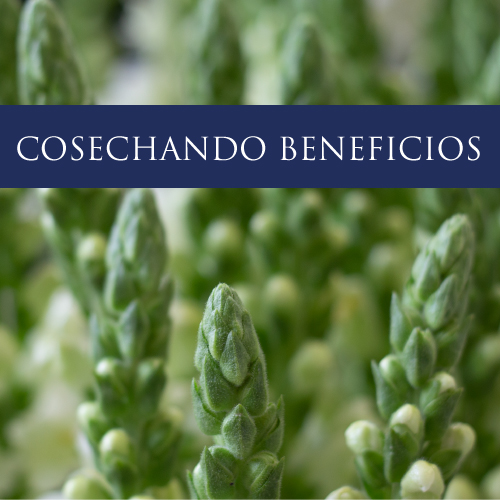 cosechando beneficios