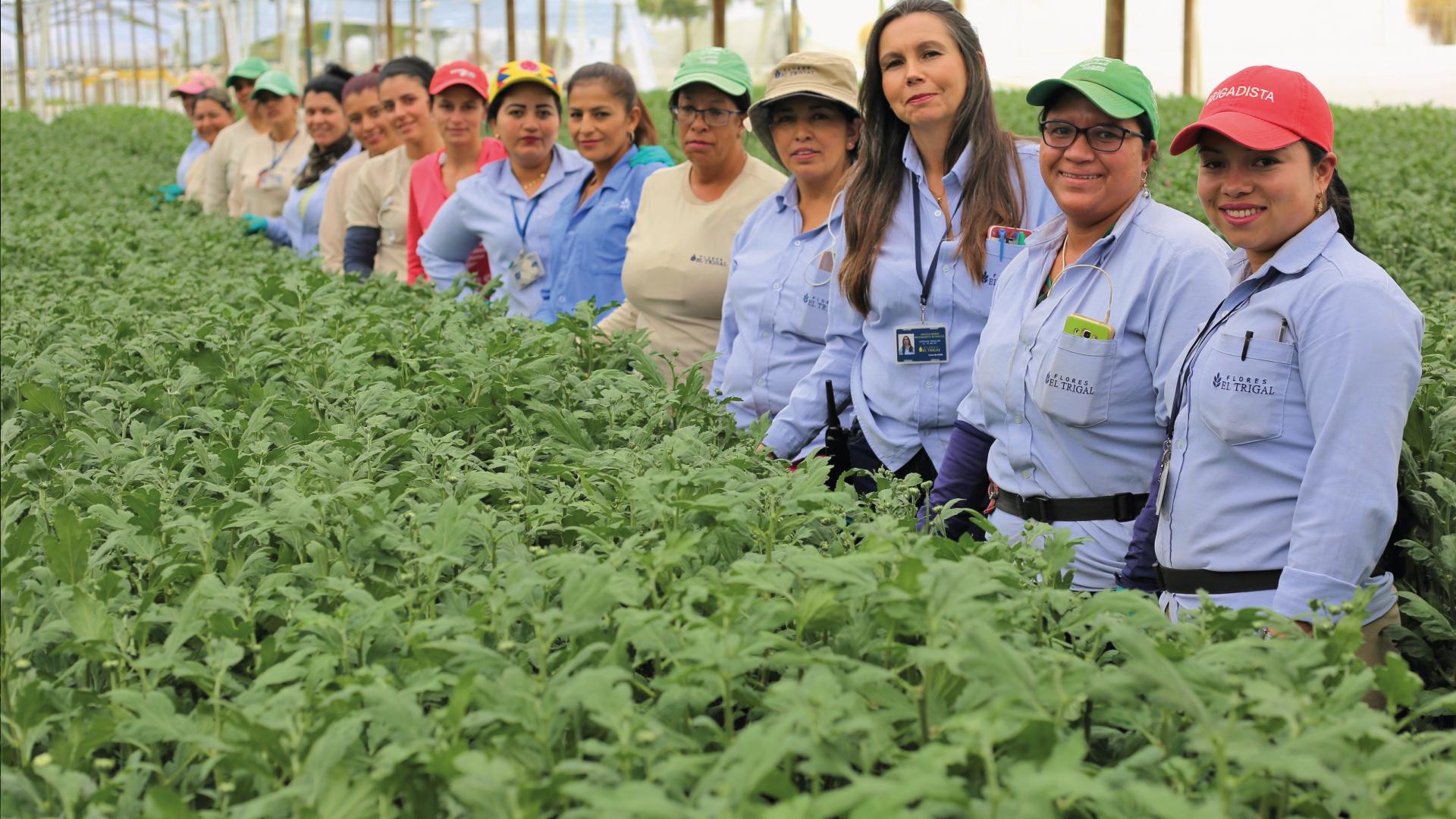 En Flores El Trigal nos unimos al compromiso para seguir cultivando con orgullo Flores de Colombia