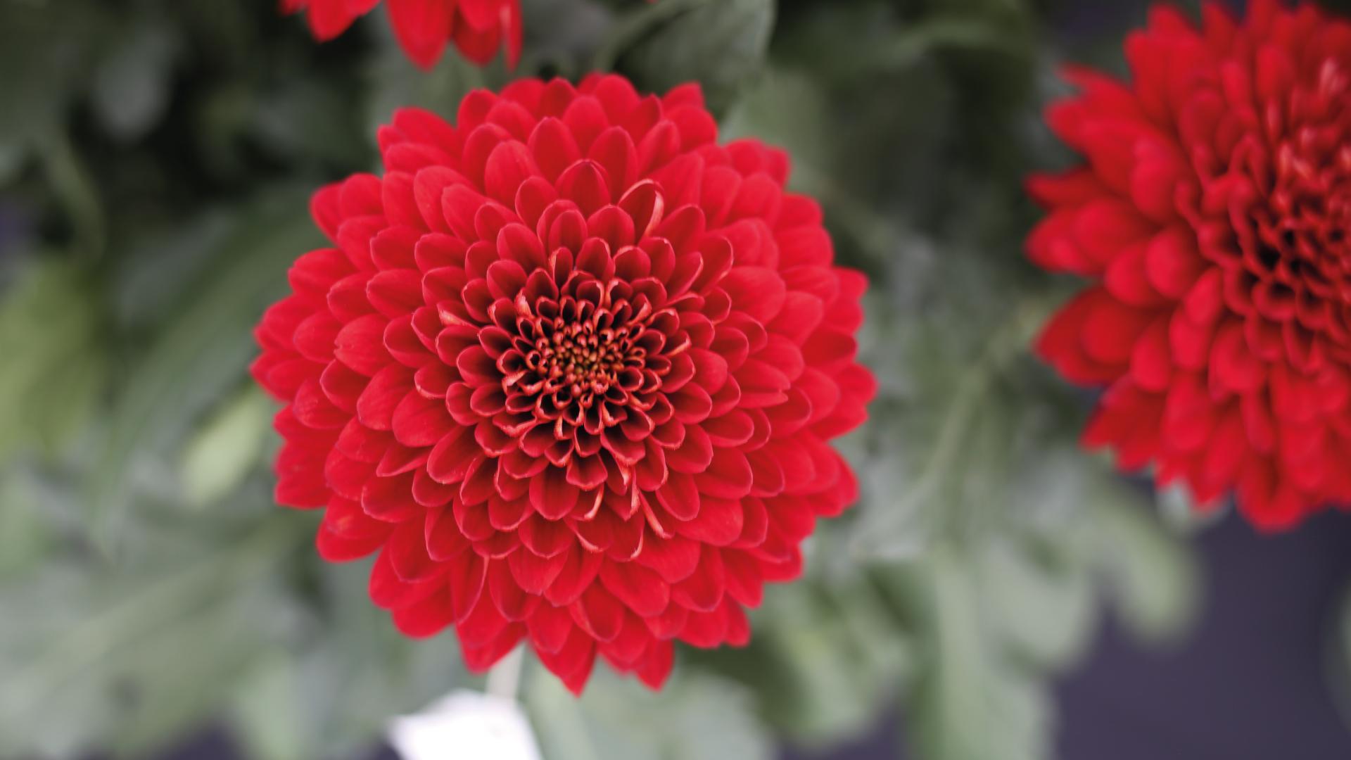 Cosechando logros en Flores El Trigal