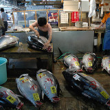 Japanese Fish Market: Tuna Shop
