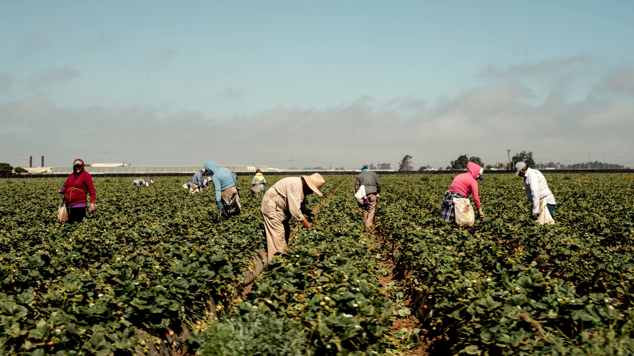 Farmworkers, Mostly Undocumented, Become 'Essential' During Pandemic