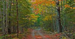 fall in Grand Rapids, MI
