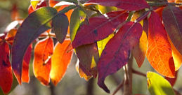 3 Fall Color Tours in Michigan