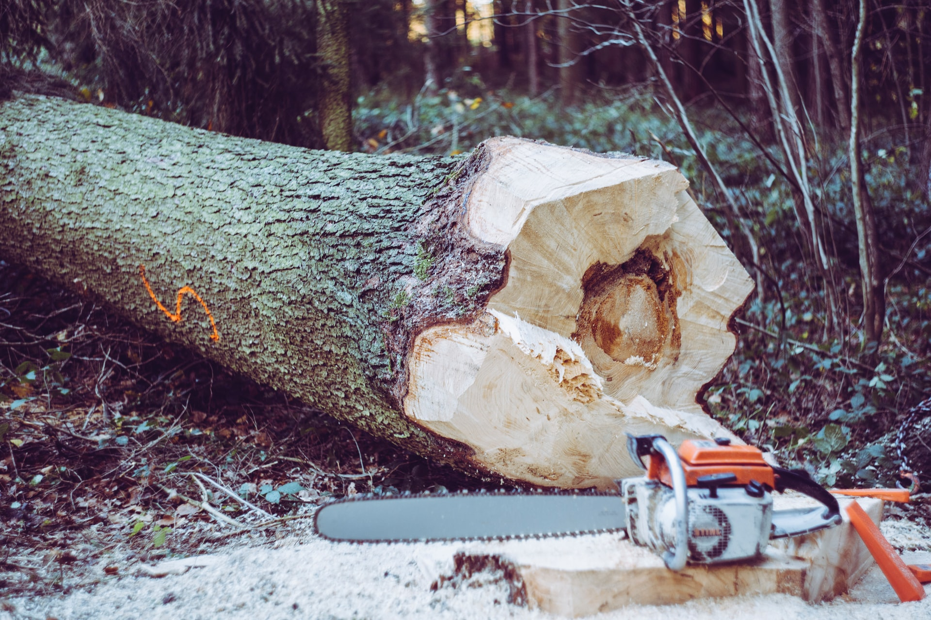 Photo of the trunk of a felled tree next to an electric saw