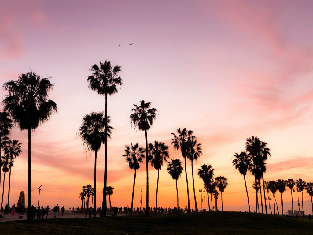 Photo of palm trees against Los Angeles sky