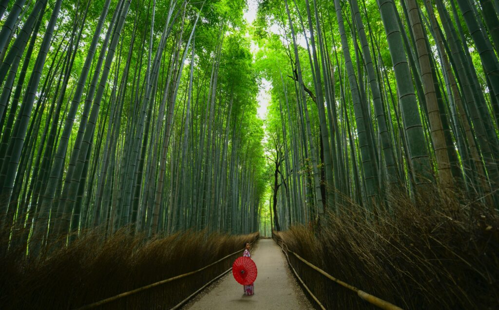 Photo of woman in kimono walking down a row of bamboo trees