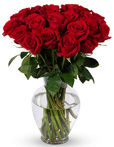 Benchmark Bouquets 2 Dozen Red Roses, With Vase (Fresh Cut Flowers)