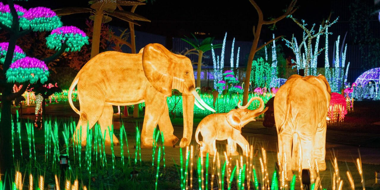 Illumi – a magical world of lights