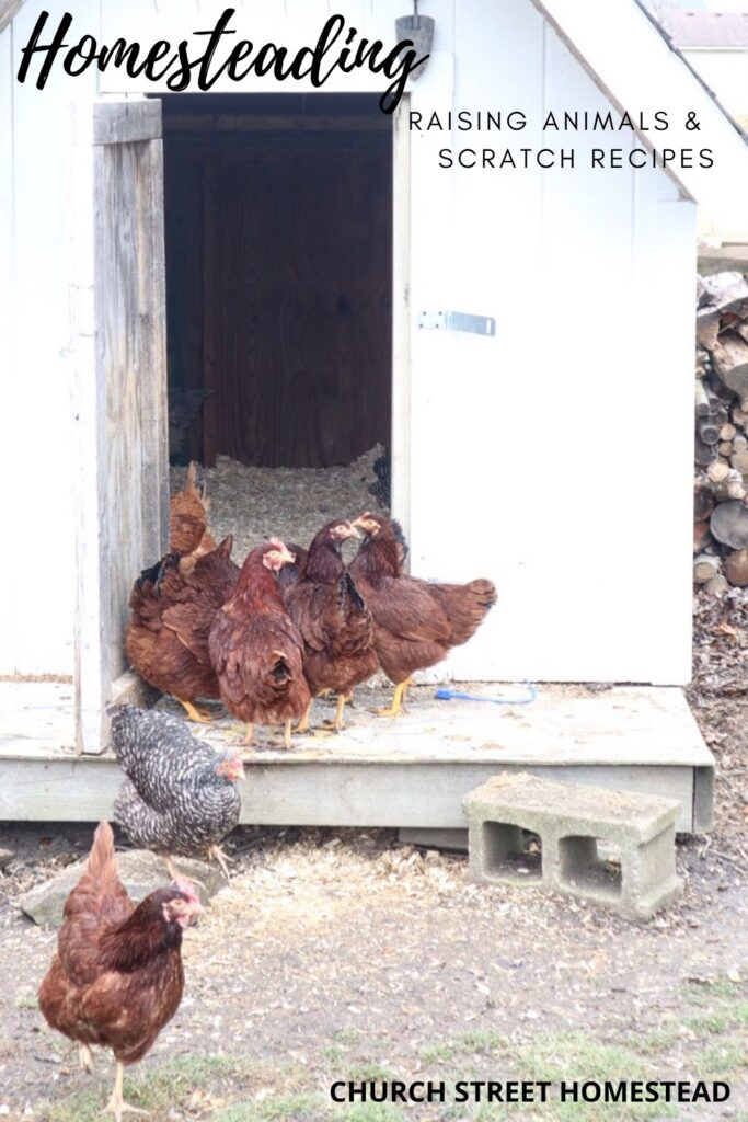 City girl owns a chicken coop.