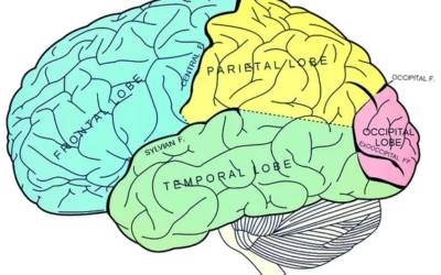 You use these areas of your brain every time you're in pain