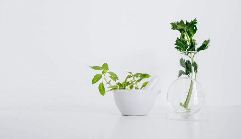 Alternative Plastic bio-plastic