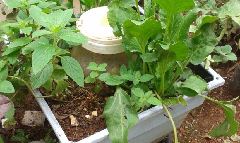 Set up your own Organic Garden