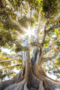 Restoration Transformation and Stabilization