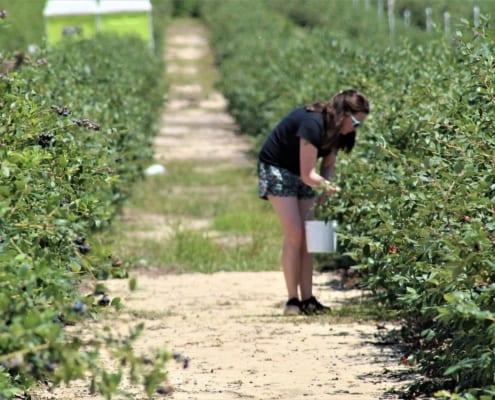 Worker on farm