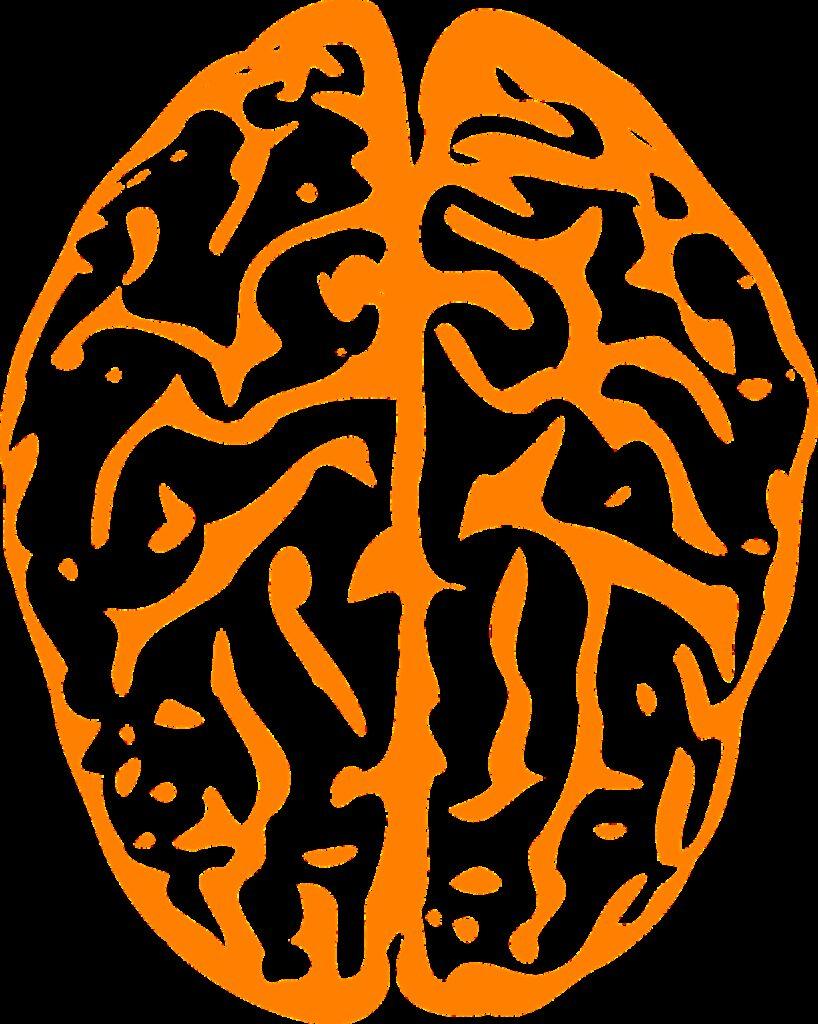 brain, intelligence, human