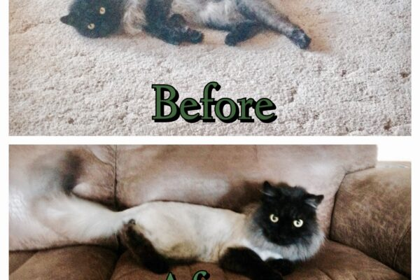 Lion Cut Before/After