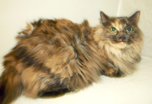 Cat Before De-Matting / De-Shedding