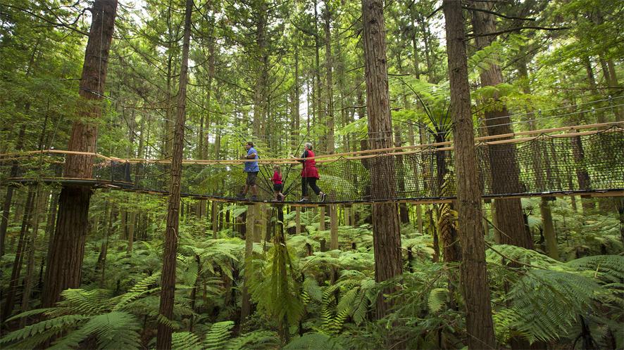 0055-Redwoods-Treewalk-Rotorua-Tourism-Media