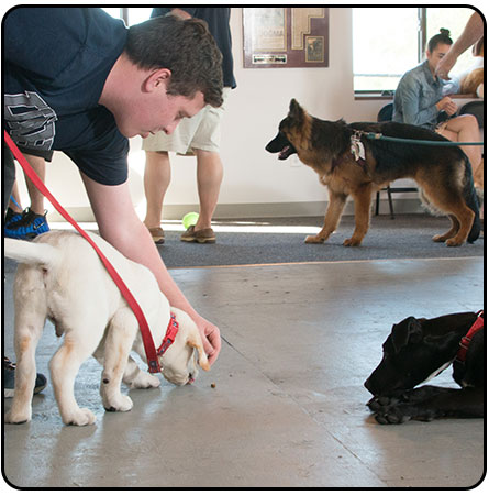 Small Group Dog Training Classes