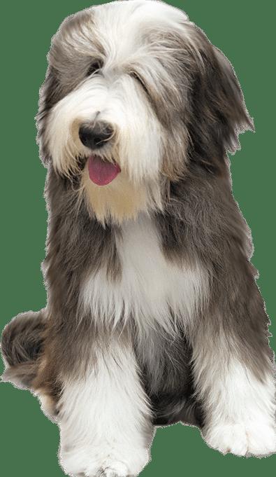 FAQs Eric Letendre's Dog Training School