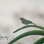 Bird-on-Aloe_06085