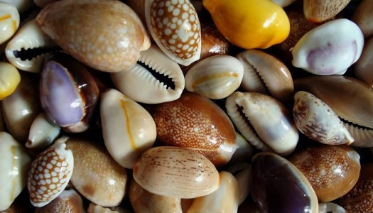 Symbolism: The Cowrie Shell